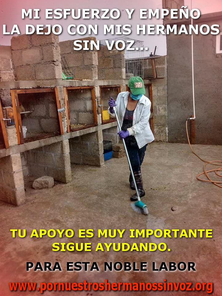 LIMPIANDO YOLA AVES