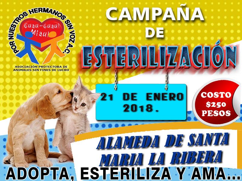 CAMPAÑA STA MA 21 DE ENERO